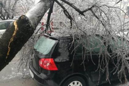 Daunele produse de copacii cazuti pe masini pot fi despagubite de asigurarea auto CASCO. Dar ce faci atunci cand nu ai CASCO?