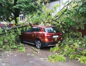 Copacii căzuți peste mașini: cum pot cere despăgubiri șoferii!